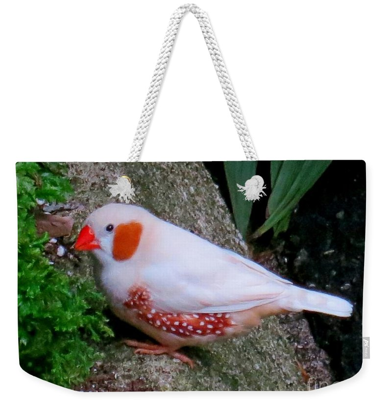 Bird Weekender Tote Bag featuring the photograph Male Zebra Finch by Lena Photo Art