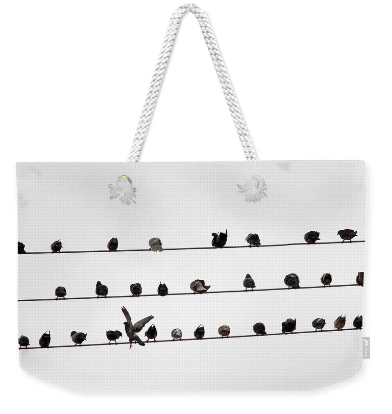 Amazon Rainforest Weekender Tote Bag featuring the photograph Birds Pattern by Ricardo Lima