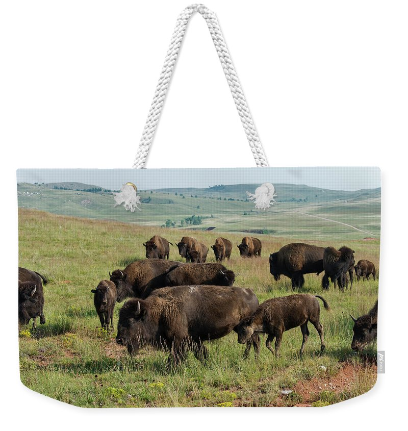 Grass Weekender Tote Bag featuring the photograph Bison Buffalo In Wind Cave National Park by Mark Newman