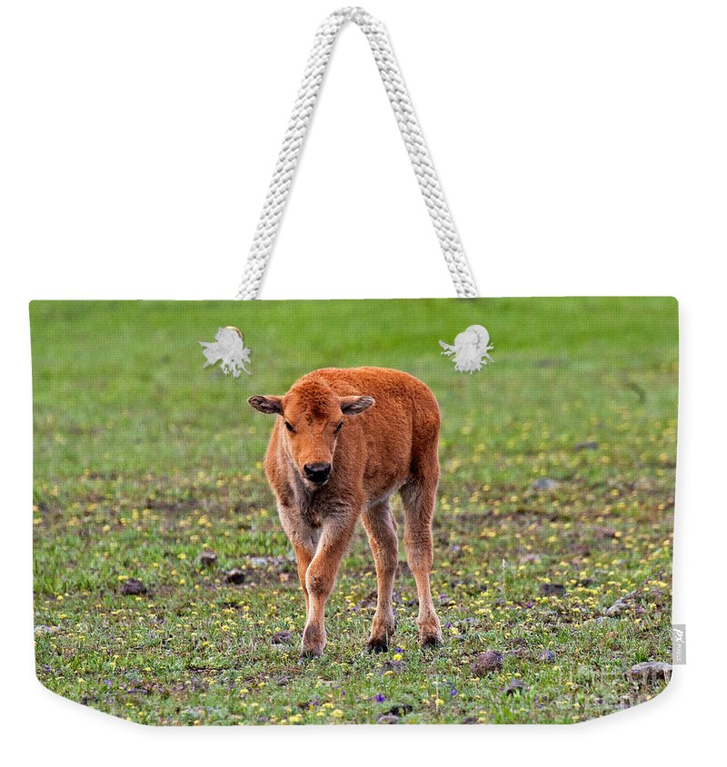 Bison Weekender Tote Bag featuring the photograph Bison Calf In The Flowers Yellowstone National Park by Fred Stearns