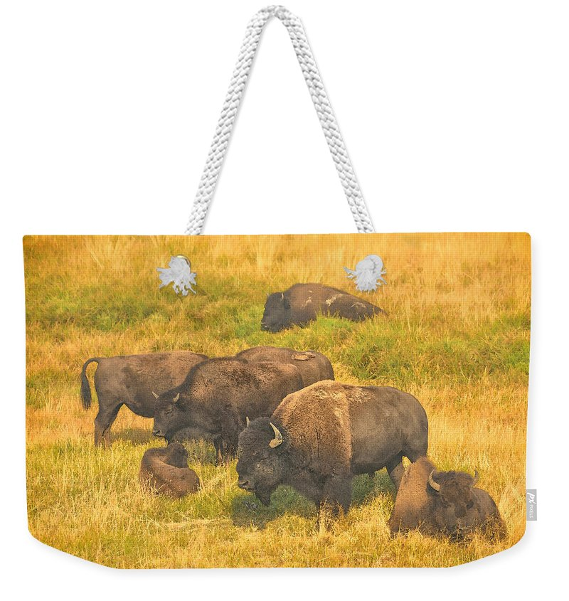 Bison Weekender Tote Bag featuring the photograph Bison Family by Greg Norrell