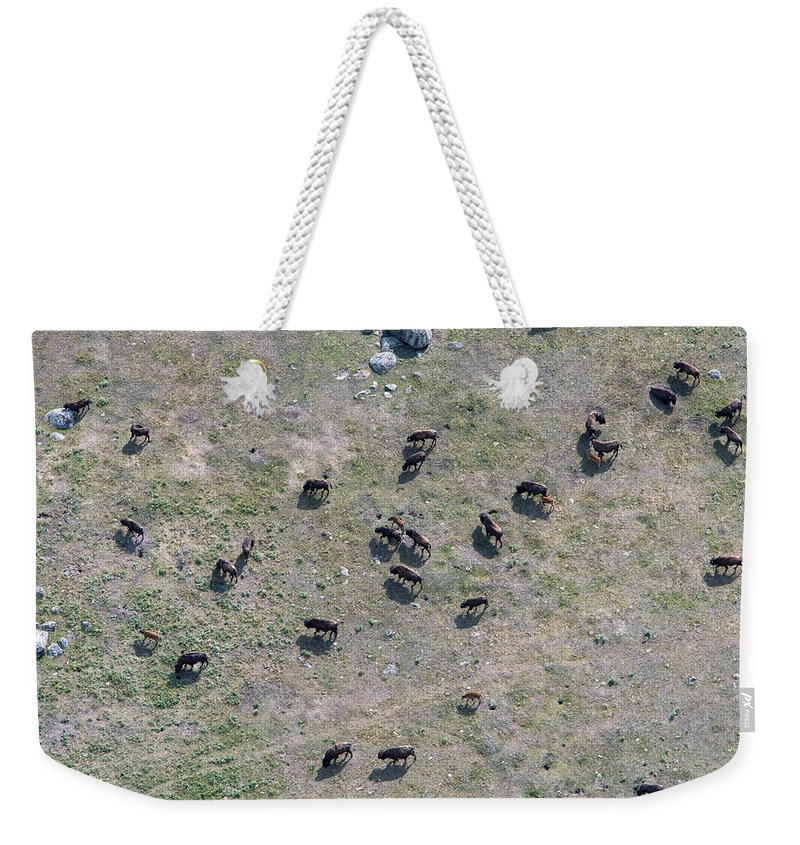 North America Weekender Tote Bag featuring the photograph Bison Herd by Max Waugh