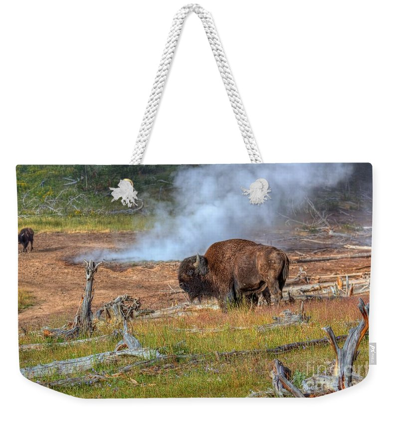 Bison Weekender Tote Bag featuring the photograph Bison Mud by James Anderson