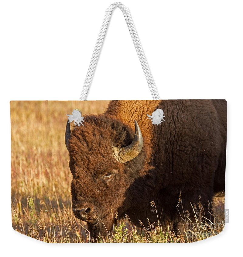 Animal Weekender Tote Bag featuring the photograph Bison Potrait At Teh Elk Ranch In Grand Teton National Park by Fred Stearns