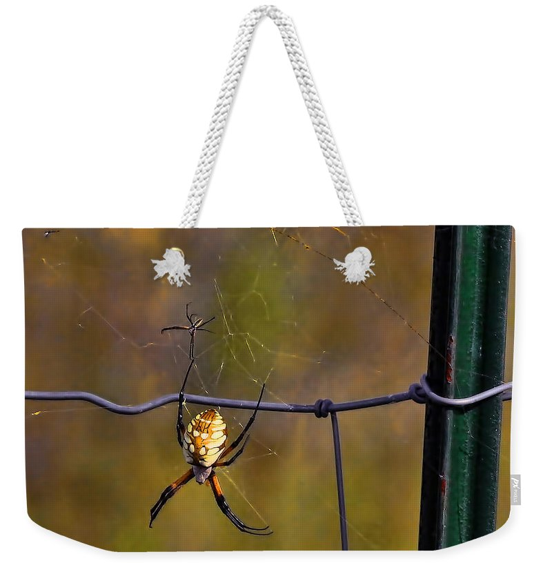 Rough Spider Building Web Son Father Start Bit Skill Encourage Improve Weekender Tote Bag featuring the photograph Bit Of A Rough Start My Son by Gary Holmes