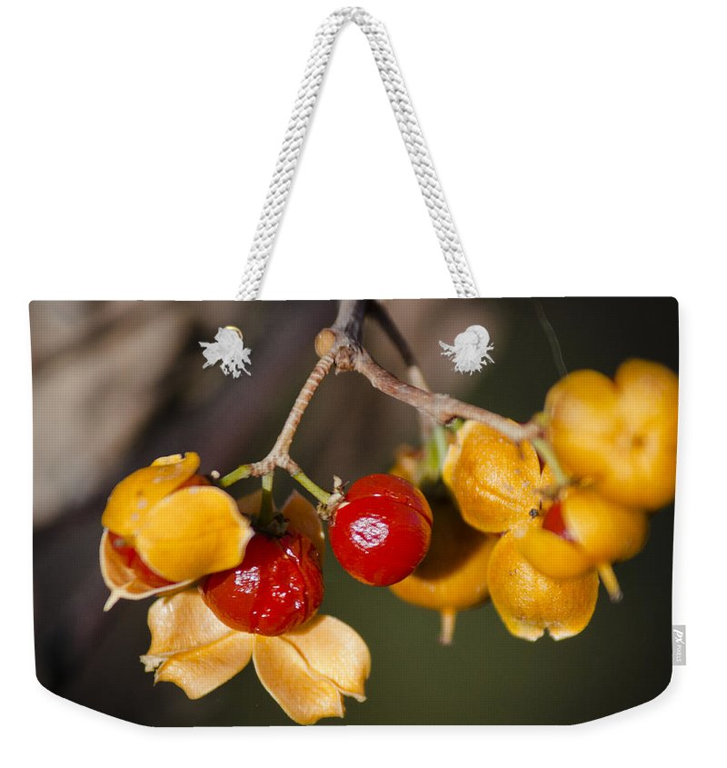 Bittersweet Weekender Tote Bag featuring the photograph Bittersweet Squared by Teresa Mucha