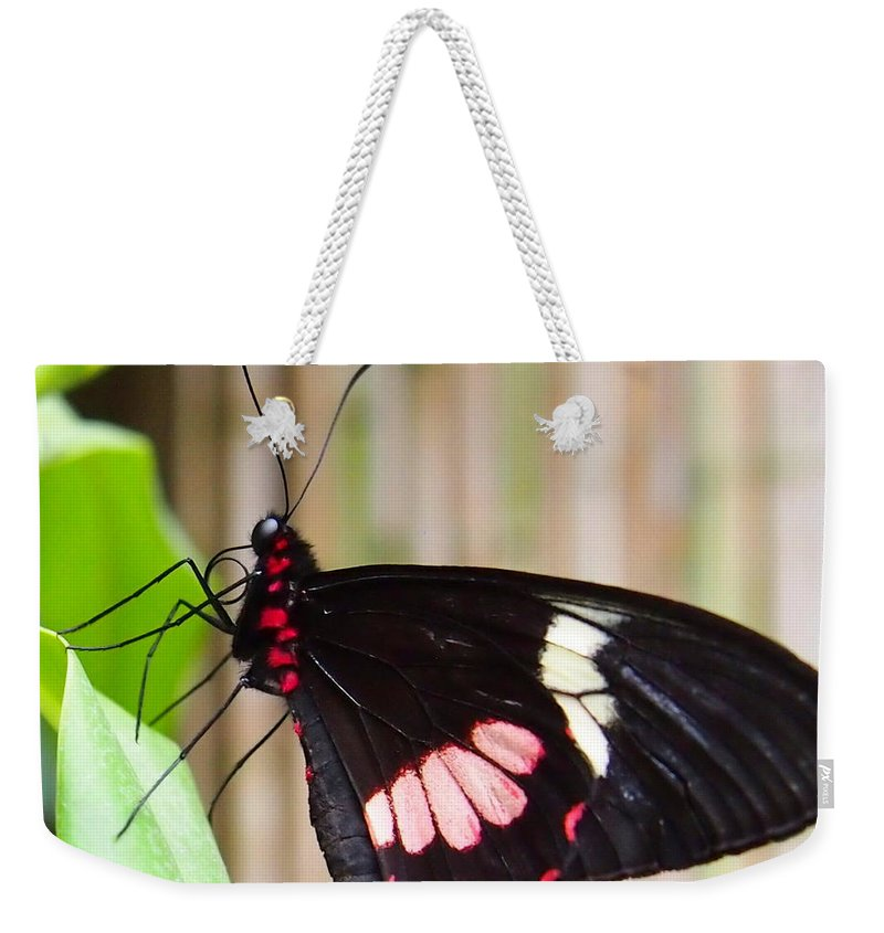 Nature Weekender Tote Bag featuring the photograph Black And Red Cattleheart Butterfly by Amy McDaniel