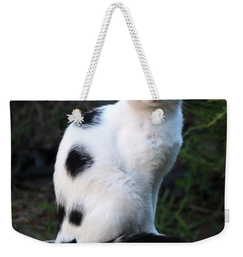 Cat Weekender Tote Bag featuring the photograph Black And White Cat On Tree Stump by Carol Groenen