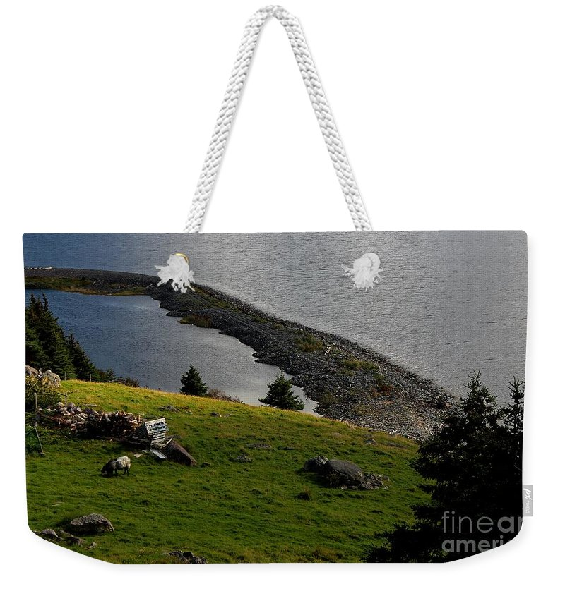 Black And White Sheep - Romeo The Ram Weekender Tote Bag featuring the photograph Black And White Sheep - Romeo The Ram by Barbara Griffin
