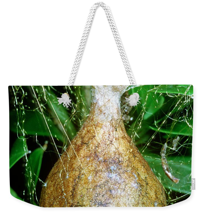 Nature Weekender Tote Bag featuring the photograph Black And Yellow Garden Spider Egg Sac by Millard H. Sharp