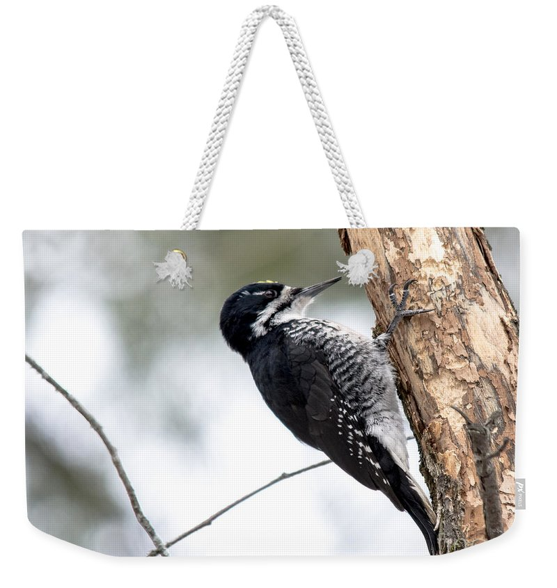 Black-backed Woodpecker Weekender Tote Bag featuring the photograph Black-backed Profile by Cheryl Baxter