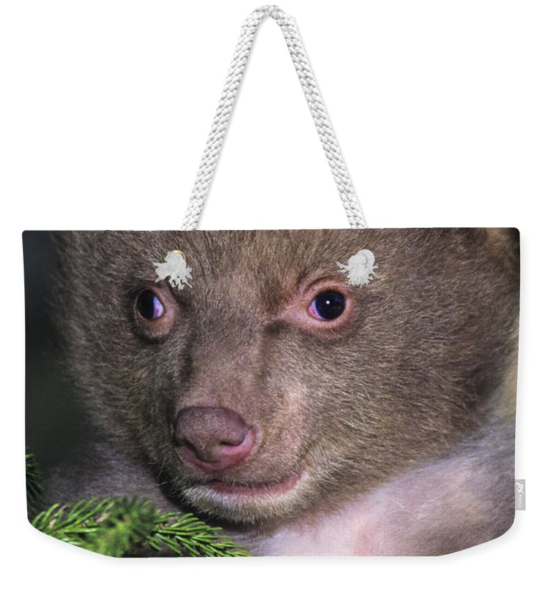 Black Bear Weekender Tote Bag featuring the photograph Black Bear Cub Portrait Wildlife Rescue by Dave Welling