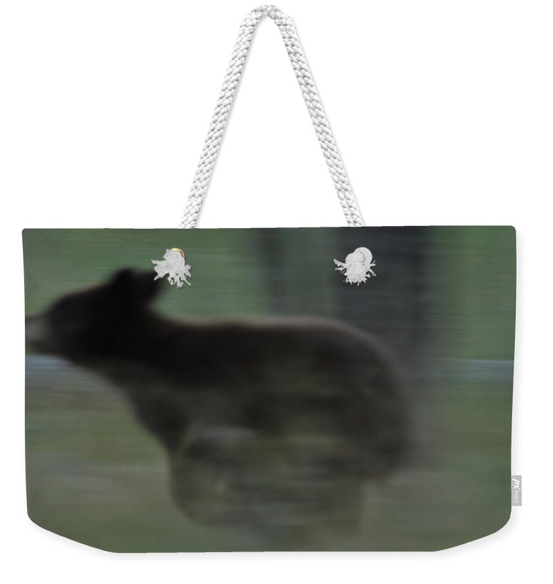 Black Bear Weekender Tote Bag featuring the photograph Black Bear Cub Running by Frank Madia