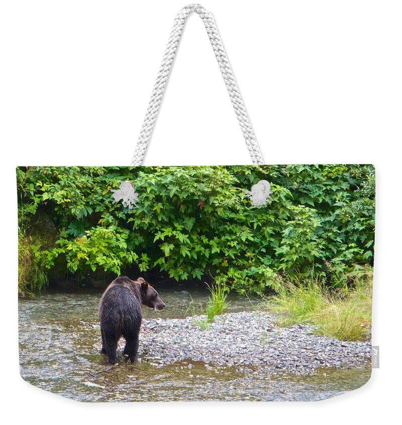 Black Bear Eating A Salmon In Fish Creek In Tongass National Forest Near Hyder Weekender Tote Bag featuring the photograph Black Bear Eating A Salmon In Fish Creek In Tongass National Forest-ak by Ruth Hager