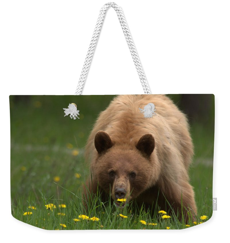 Bear Weekender Tote Bag featuring the photograph Black Bear by Frank Madia