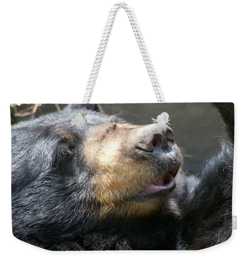 Bear Weekender Tote Bag featuring the photograph Black Bear Up Close by Larry Allan