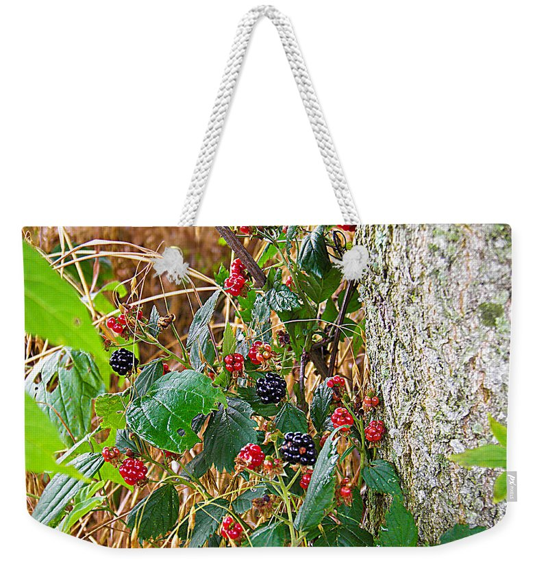Black Weekender Tote Bag featuring the photograph Black Berry by Nick Kirby
