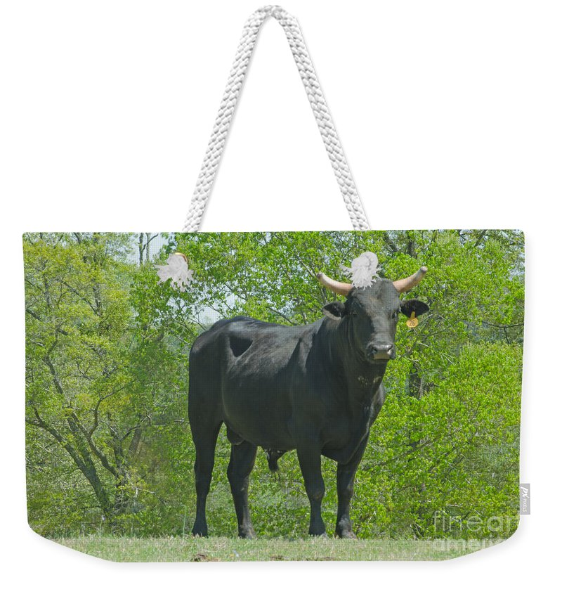 Animal Weekender Tote Bag featuring the photograph Black Bull by Donna Brown