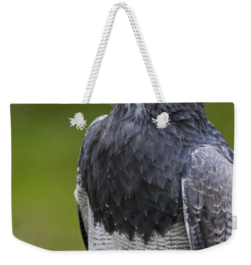 Close-up Weekender Tote Bag featuring the photograph Black-chested Buzzard-eagle by Arterra Picture Library