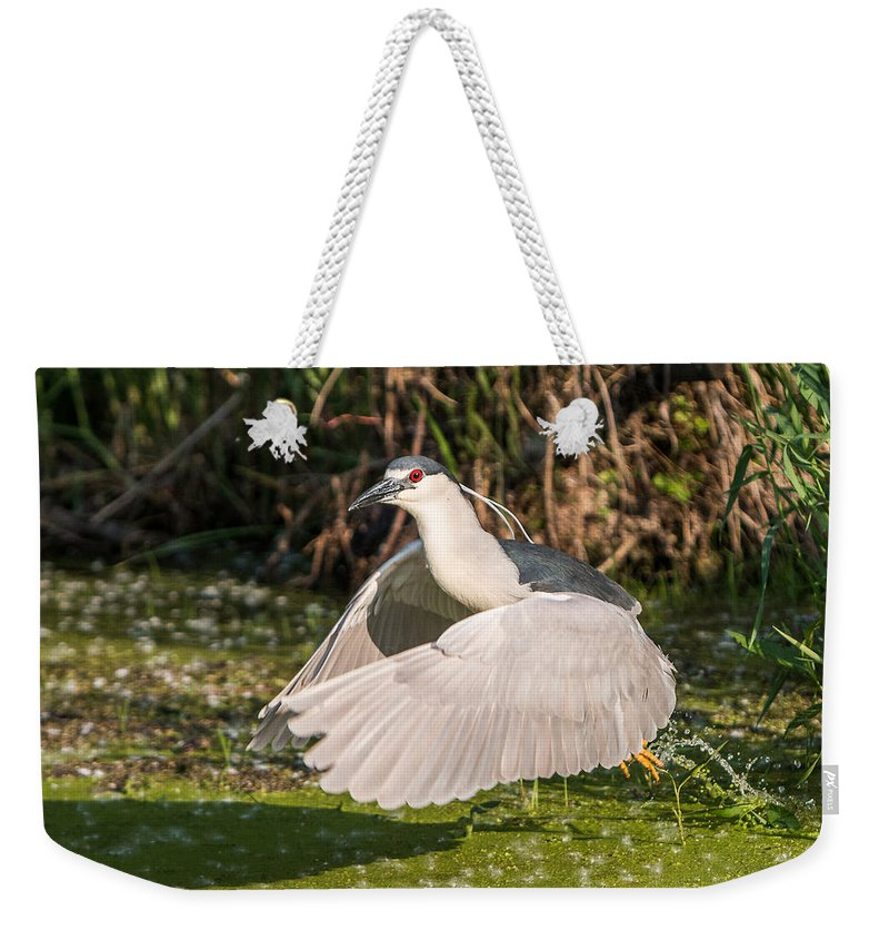Black-crowned Weekender Tote Bag featuring the photograph Black-crowned Night Heron by Patti Deters