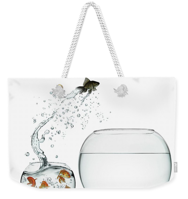 Pets Weekender Tote Bag featuring the photograph Black Goldfish by Gandee Vasan