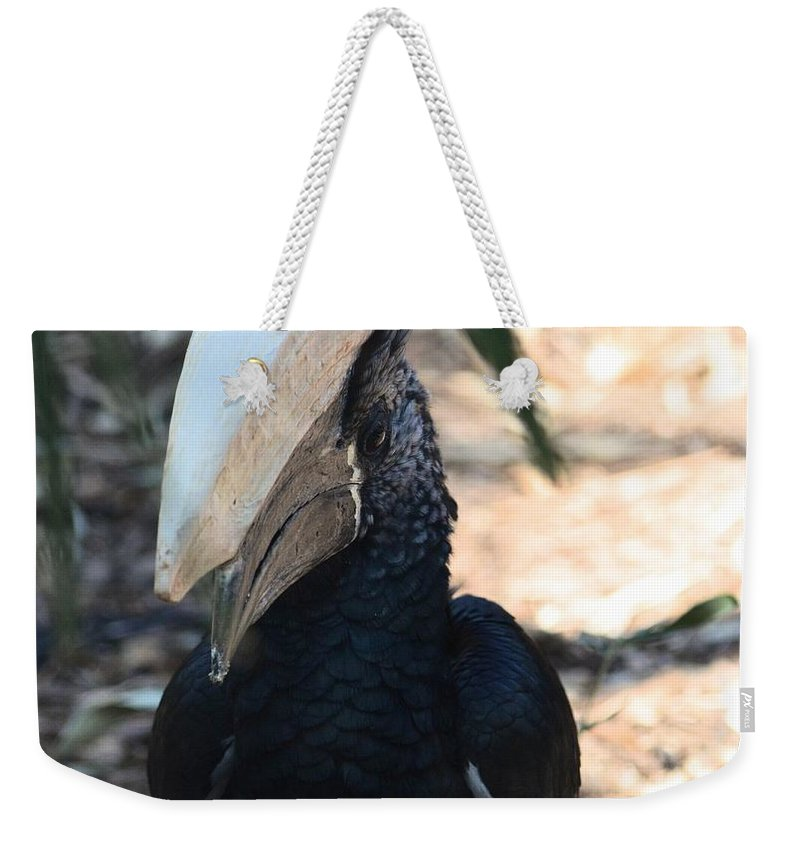 Black Hornbill Weekender Tote Bag featuring the photograph Black Hornbill by Maria Urso