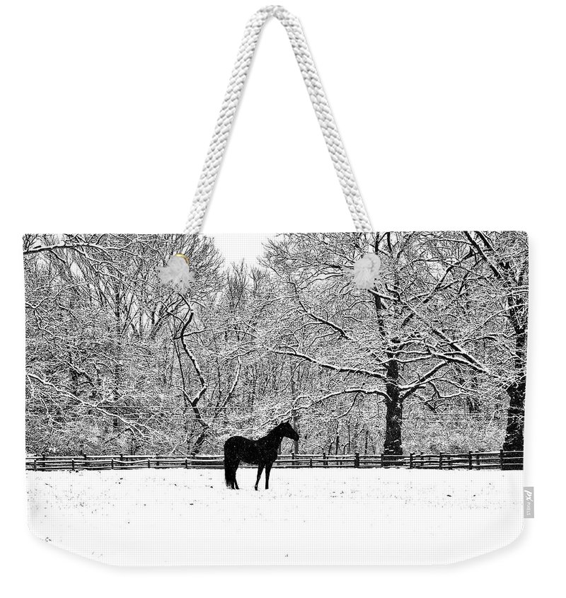 Black Horse In The Snow Weekender Tote Bag featuring the photograph Black Horse In The Snow by Bill Cannon