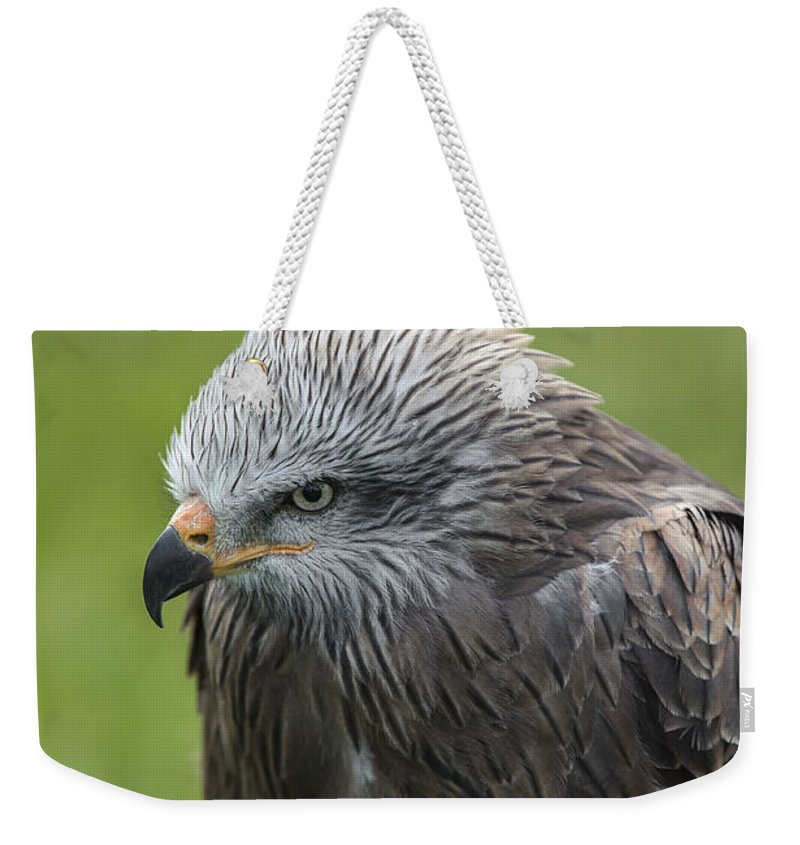 Black Kite Weekender Tote Bag featuring the photograph Black Kite 1 by Arterra Picture Library