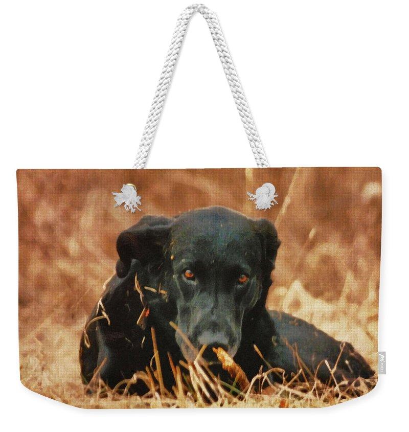 Black Labrador Weekender Tote Bag featuring the photograph Black Labrador by Linda Sannuti
