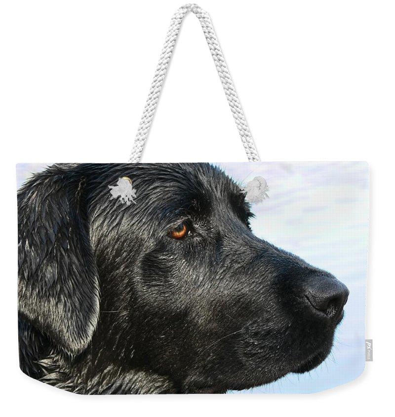 Labrador Retriever Weekender Tote Bag featuring the photograph Black Labrador Retriever After The Swim by Jennie Marie Schell