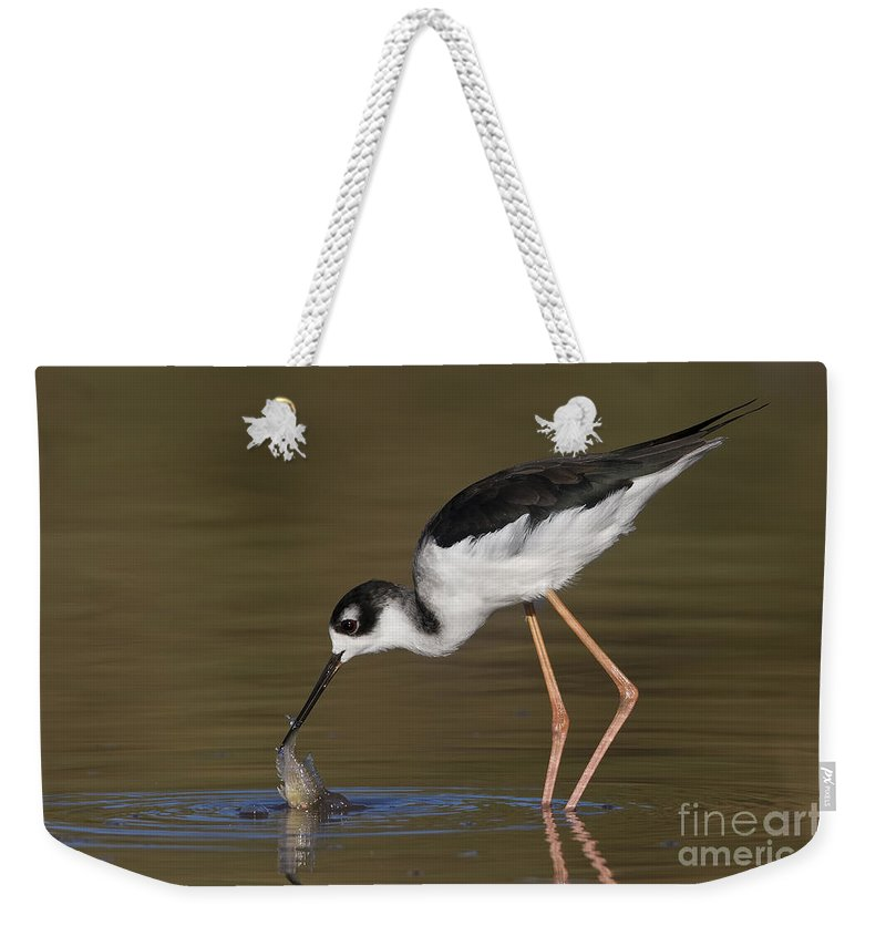 Black-necked Stilt Weekender Tote Bag featuring the photograph Black Necked Stilt With Fish by Bryan Keil