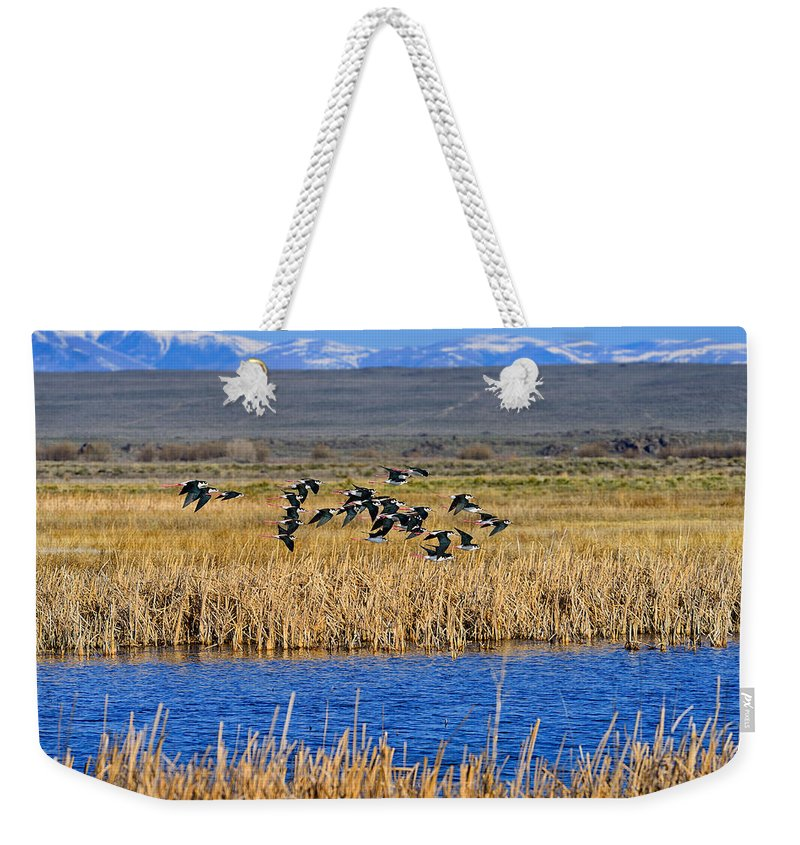Black-necked Stilts Weekender Tote Bag featuring the photograph Black-necked Stilts In Flight by Greg Norrell