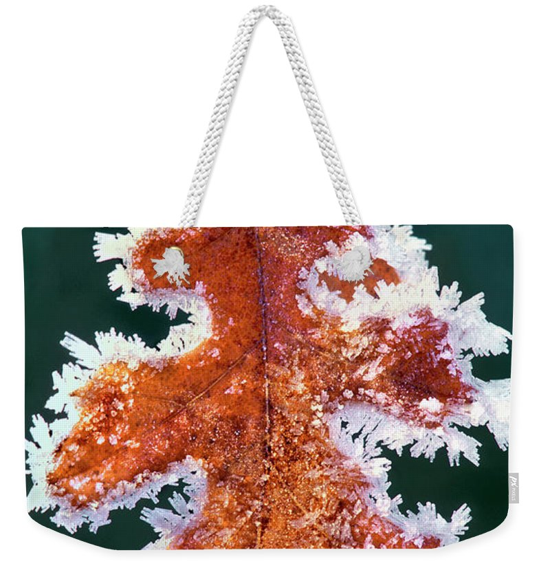 North America Weekender Tote Bag featuring the photograph Black Oak Leaf Rime Ice Yosemite National Park California by Dave Welling