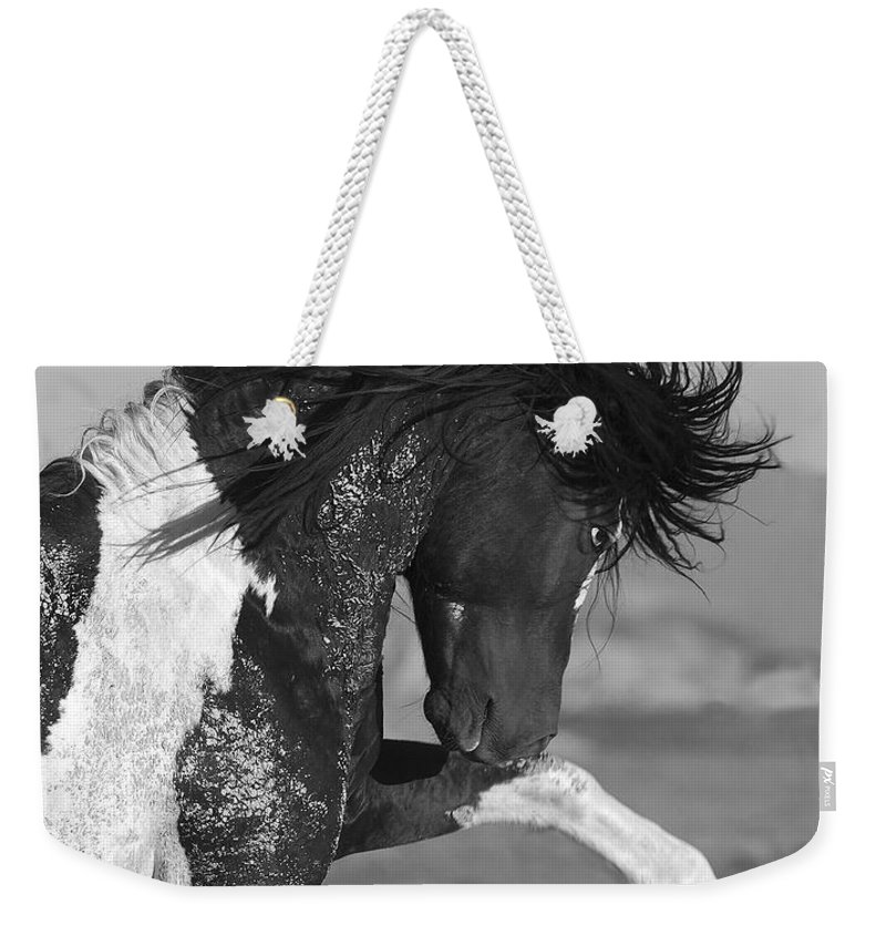 Stallion Weekender Tote Bag featuring the photograph Black Pinto Stallion Strikes Out by Carol Walker