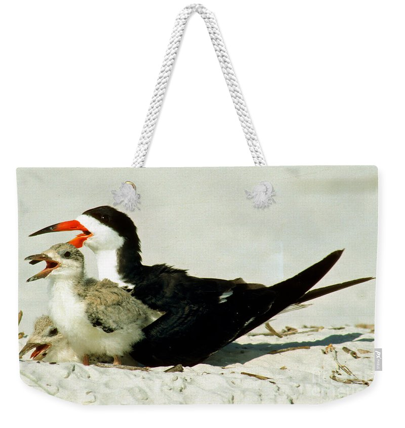 Black Skimmer Weekender Tote Bag featuring the photograph Black Skimmers by Millard H. Sharp