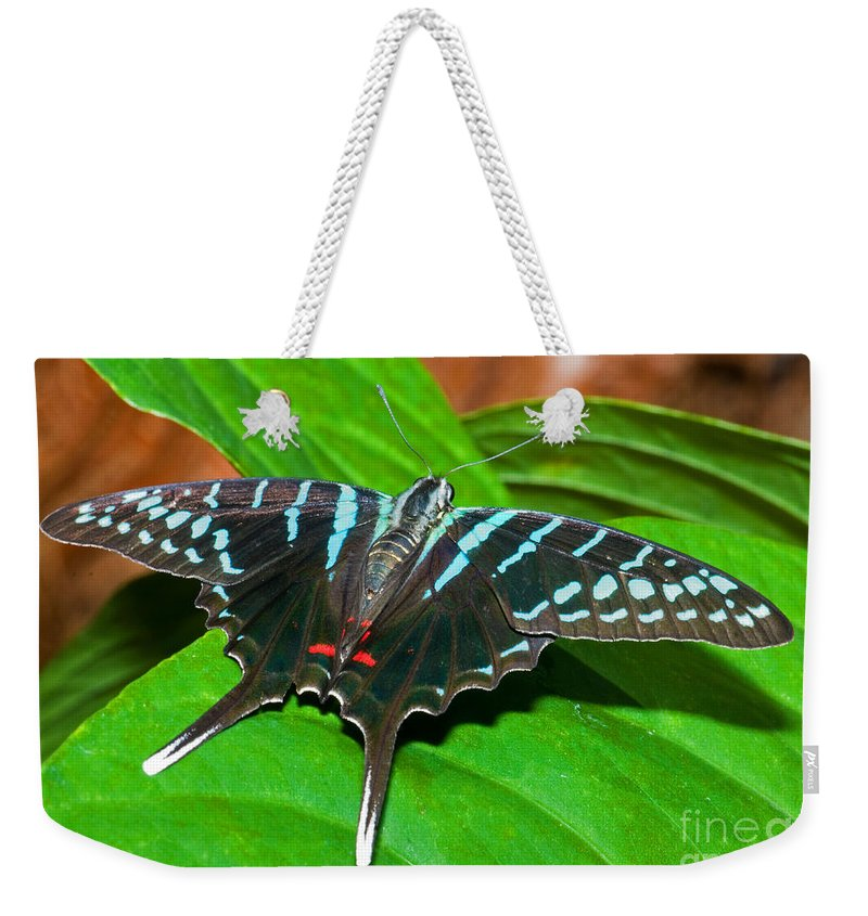 Animal Weekender Tote Bag featuring the photograph Black Swordtail Butterfly by Millard H. Sharp