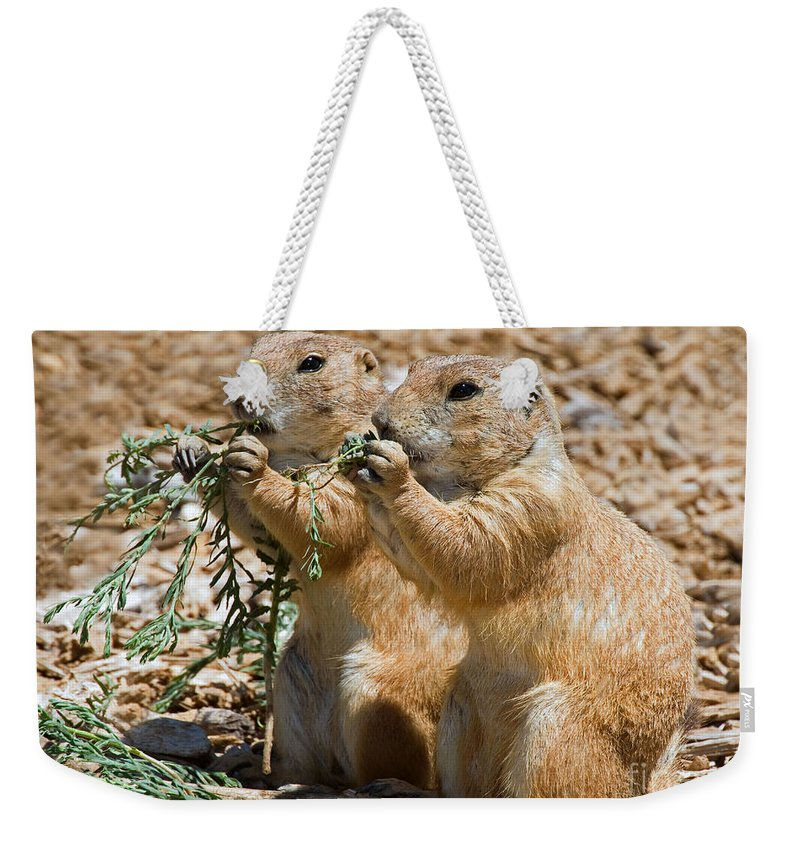 Nature Weekender Tote Bag featuring the photograph Black Tail Prairie Dogs by Millard H. Sharp