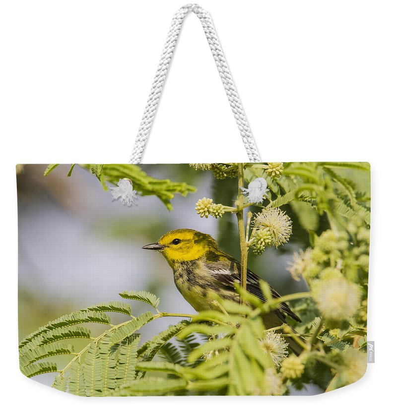 Doug Lloyd Weekender Tote Bag featuring the photograph Black-throated Gren Warbler by Doug Lloyd
