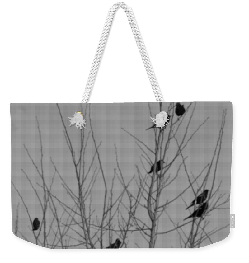 Blackbirds Weekender Tote Bag featuring the photograph Blackbirds By The Moon by Richard Kitchen