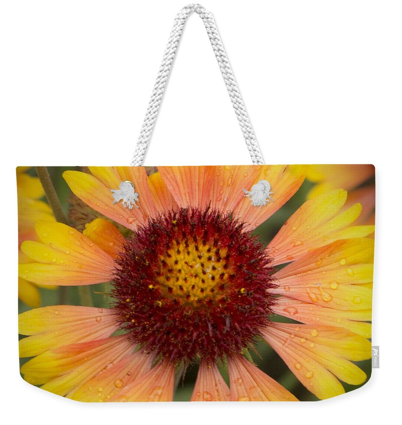 Blanket Flowers Weekender Tote Bag featuring the photograph Blanket Flower by Belinda Greb