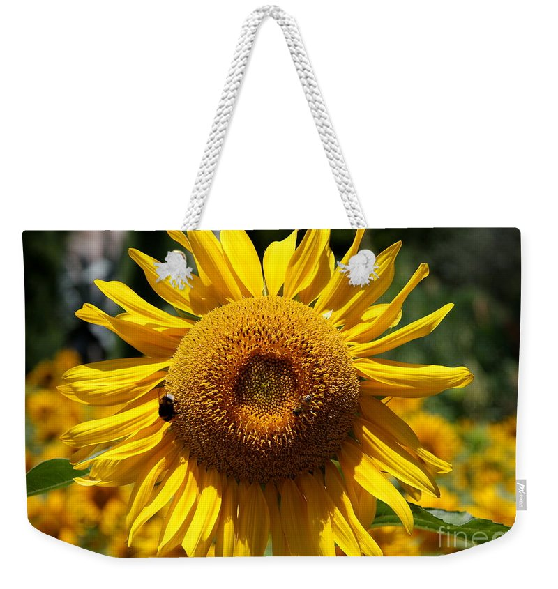 Yellow Sunflower Weekender Tote Bag featuring the photograph Blazing Yellow Sunflower by Christiane Schulze Art And Photography