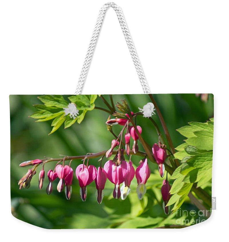Flower Weekender Tote Bag featuring the photograph Bleeding Heart by Joe Geraci