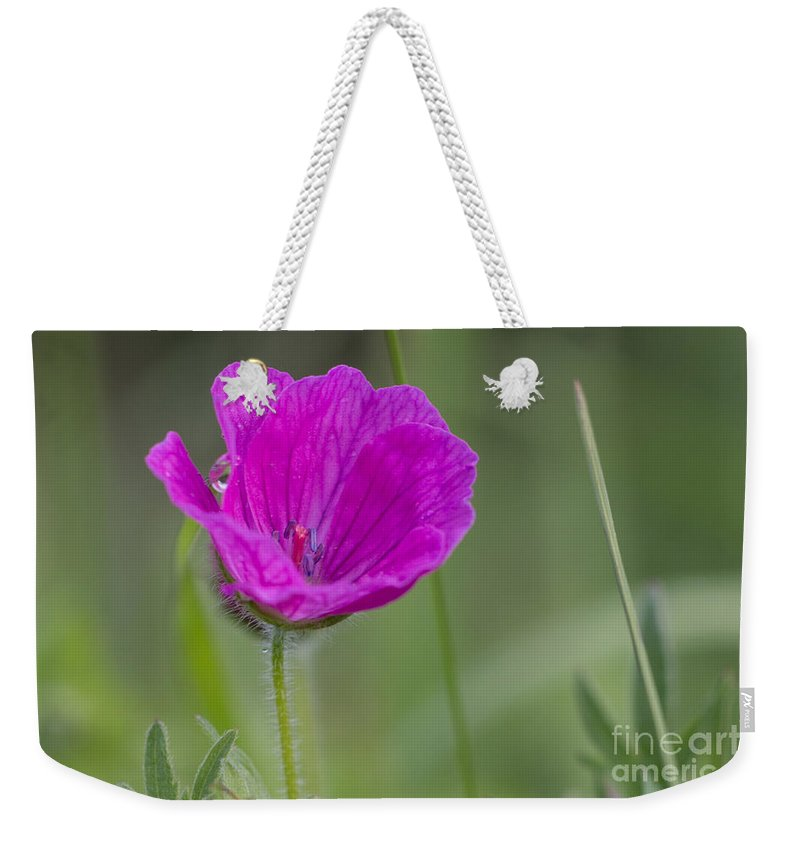 Bloody Cranesbill Weekender Tote Bag featuring the photograph Bloody Geranium Dew by Jivko Nakev