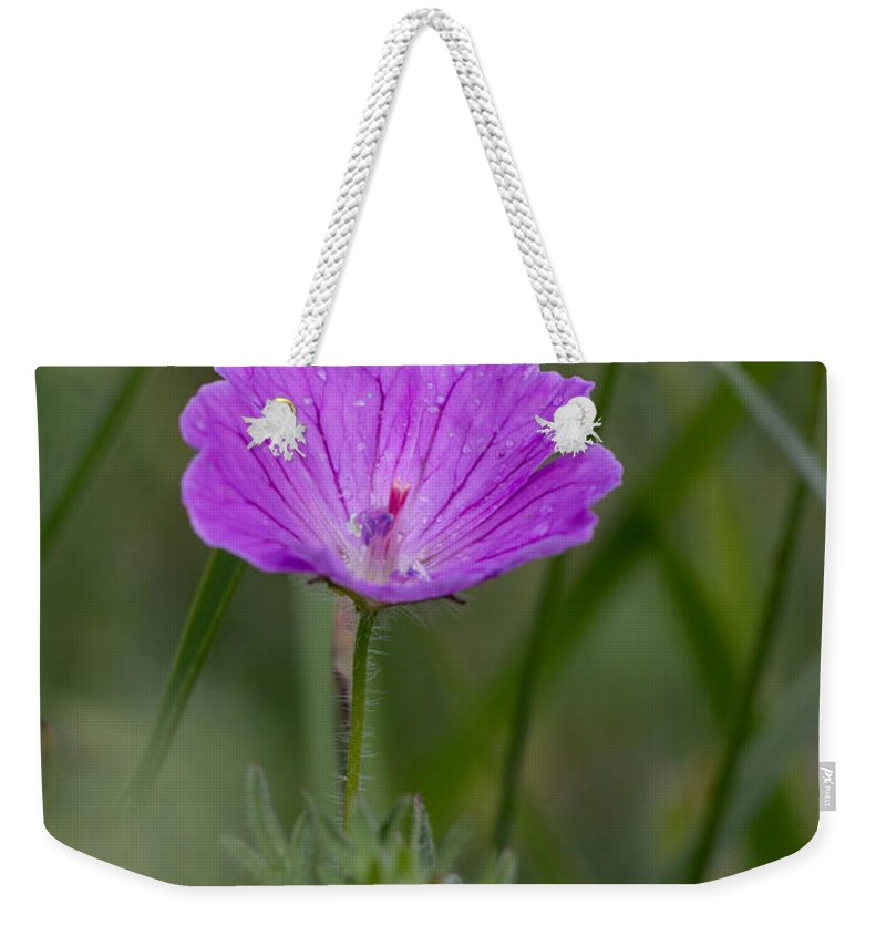 Bloody Cranesbill Weekender Tote Bag featuring the photograph Bloody Geranium Wild Flower by Jivko Nakev