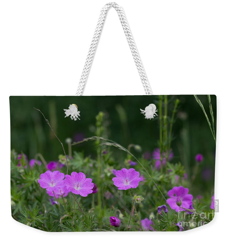 Bloody Cranesbill Weekender Tote Bag featuring the photograph Bloody Geranium Wild Flowers by Jivko Nakev