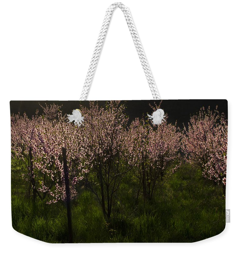 Garden Weekender Tote Bag featuring the photograph Blooming Almond Trees by TouTouke A Y