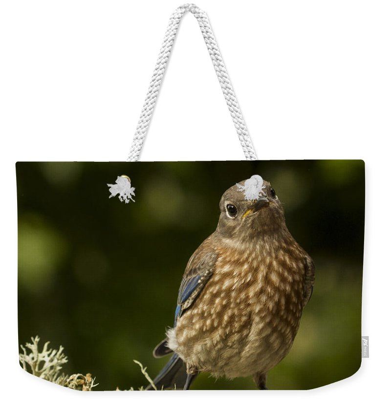 Animals Weekender Tote Bag featuring the photograph Blue Baby by Jean Noren