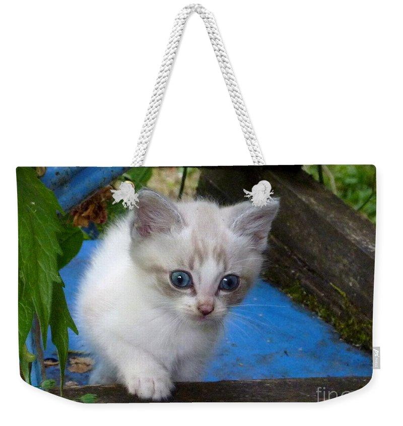 Cute Weekender Tote Bag featuring the photograph Blue Boy by Rain Shine