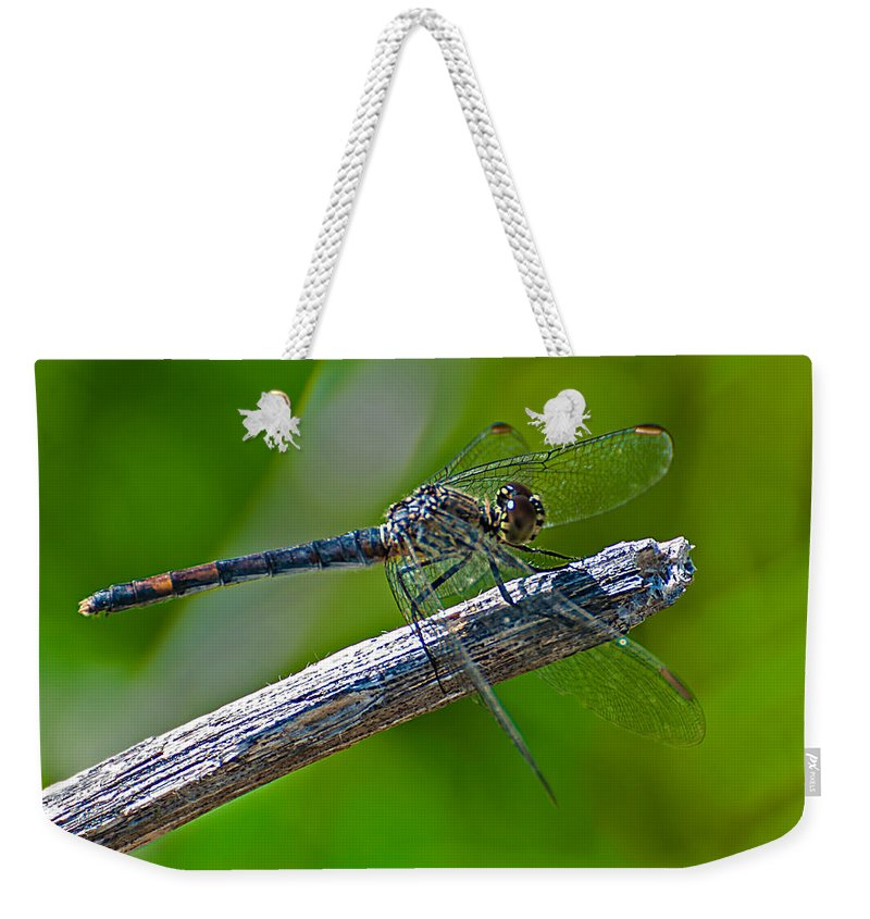 Blue Weekender Tote Bag featuring the photograph Blue Dragonfly 5 by Photos By Cassandra
