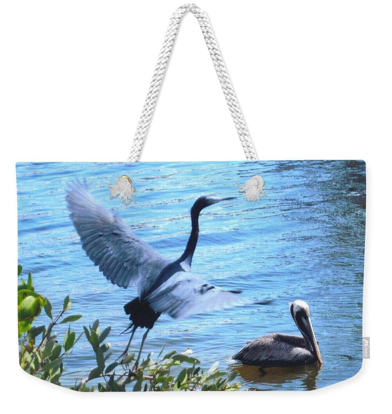 Taking Flight Weekender Tote Bag featuring the photograph Blue Heron And Pelican by Robert Floyd